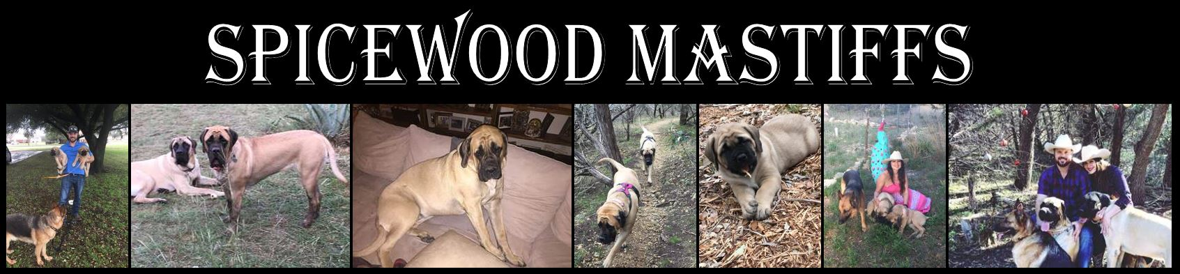 Spicewood Mastiffs